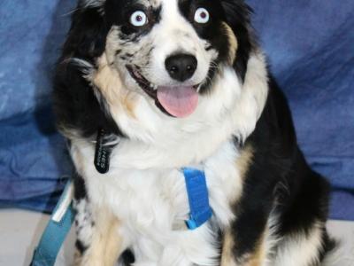 Crazy Cat Canine Academy Graduation – 2019-01-11