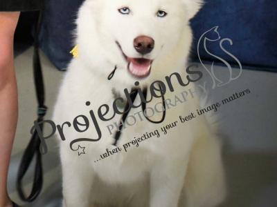 Crazy Cat Canine Academy Graduation – 05-23-19