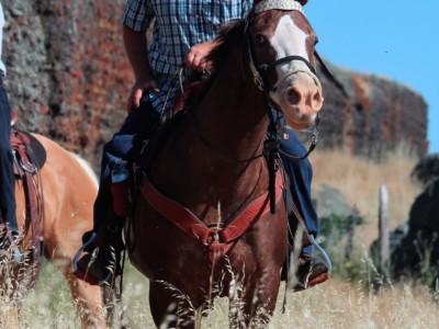 CSHA 05-20-17 Willms Ranch Trail Trial Day 1