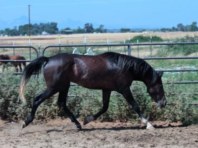 Black Duck Ranch Photo Shoot – Rushing